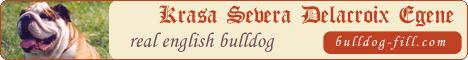 Английский бульдог - Филя - KRASA SEVERA DELACROIX EGENE. Продажа щенков. Фотогалерея малышей английского бульдога. Любимый друг Петерболда Клепы. Обмен ссылками.