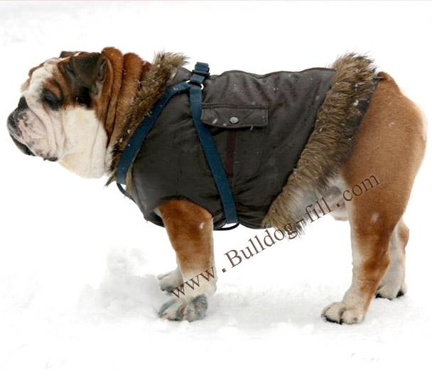 Одежда для собак породы английский